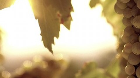 <strong>PROMO FILM </strong> P&F Winearies